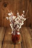 Bouquet of pussy willow twigs in glass jar on wooden background Royalty Free Stock Photography