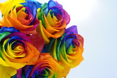 Bouquet of Rainbow rose. Bouquet of happy flower : rainbow rose with colored petals Stock Photography