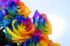 Bouquet of Rainbow rose. Bouquet of happy flower : rainbow rose with colored petals Royalty Free Stock Photography