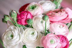 Bouquet of ranunculus of different shades. Pink, white, creamy Stock Photos
