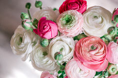 Bouquet of ranunculus of different shades. White, pink, creamy, blush Stock Image