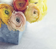 Bouquet of  ranunculus flowers Royalty Free Stock Images