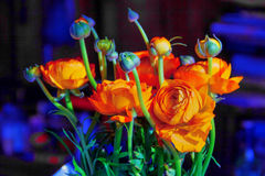 Bouquet of ranunculus Royalty Free Stock Image