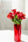 Bouquet of red alstroemeria in vase on white table Royalty Free Stock Images