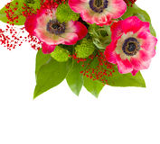 Bouquet of red anemone flowers Royalty Free Stock Image