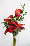 Bouquet of red calla lilies Stock Image