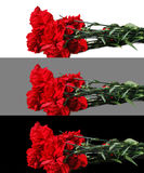Bouquet of red carnations Royalty Free Stock Photos