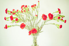 Bouquet of red carnations Stock Images