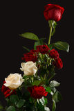 The bouquet red and creamy roses. On dark background Stock Photos