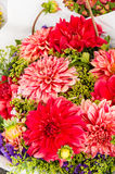 Bouquet of red dahlia flowers in bloom Stock Image