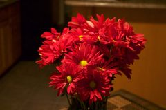 Red daisies in a home interior royalty free stock photography