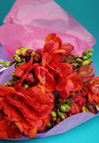 Bouquet of red flowers Stock Photos