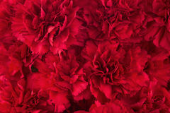 Bouquet of red flowers carnation for use as nature background. Stock Photos