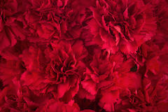Bouquet of red flowers carnation for use as nature background. Stock Image