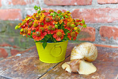 Bouquet of red flowers and a giant snail Stock Photography