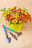 Bouquet of red flowers (Helenium) and garden tools  on an canvas Royalty Free Stock Photo
