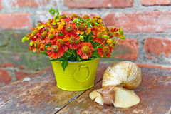 Bouquet of red flowers (Helenium) and giant snail (Achatina Reti Stock Photo