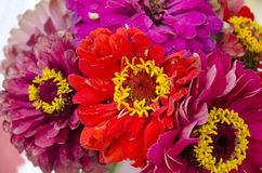 Bouquet of red flowers majors Royalty Free Stock Photography