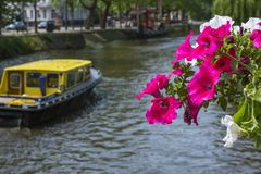 Bouquet of red flowers near the canal with yellow boat Stock Photography