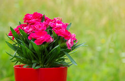 Bouquet of red flowers Royalty Free Stock Photography