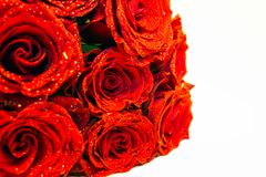 Bouquet of red flowers with rain droplets and white backdrop. Love and anniversary, valentine and life, special, gift and marriage concept stock photography