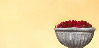 Bouquet of red flowers in a stone vase on a yellow wall stock image