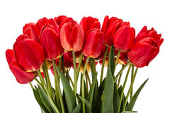 Bouquet of red flowers tulips, isolated on white background Royalty Free Stock Photography