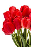 Bouquet of red flowers tulips, isolated on white background Royalty Free Stock Photo