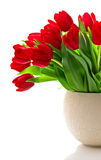 Bouquet of red fresh spring tulip flowers Stock Photos