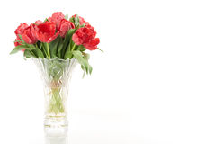 Bouquet of red fresh spring tulip flowers in vase on left side. Royalty Free Stock Images