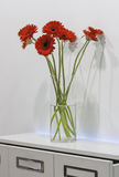 Bouquet of red gerberas in a glass vase stock photos
