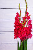 Bouquet of red gladiolus. On white wooden background royalty free stock photography
