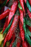 Bouquet of red and green peppers. And herbs half dried Stock Image