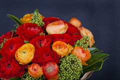 Bouquet of red and orange Ranunkulyus Stock Images