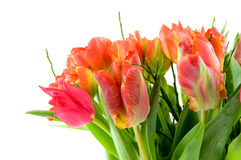 Bouquet red and orange tulips Royalty Free Stock Photos
