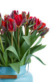 Bouquet of red parrot tulips close up Stock Image