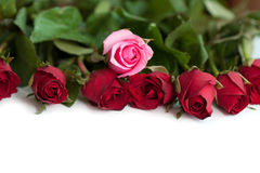 Bouquet of red and pink roses, isolated Stock Images
