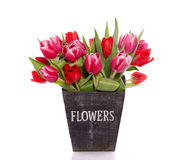 Bouquet  red and pink tulips Royalty Free Stock Photo