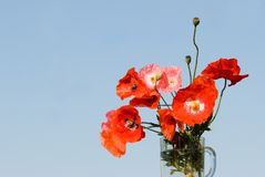 Bouquet of red poppies. Against blue sky stock image