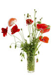 Bouquet of red poppies in a glass Stock Photo