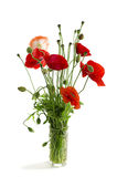 Bouquet of red poppies in a glass Stock Image