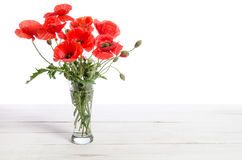 Bouquet of red poppies in glass vase Royalty Free Stock Image