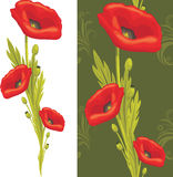 Bouquet of red poppies Stock Images