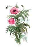 Bouquet of red poppies. Watercolor illustration on white background Royalty Free Stock Images