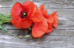 Bouquet of red poppies on wooden background.Top view with copy space. royalty free stock images