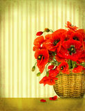 Bouquet of red poppy flowers Stock Images