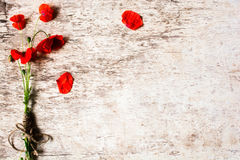 Bouquet of red poppy flowers Stock Photography