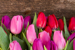 Bouquet of  red and purple  tulip flowers Royalty Free Stock Photography