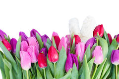 Bouquet of  red and purple  tulip flowers Stock Photography