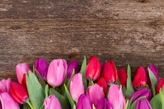 Bouquet of  red and purple  tulip flowers Stock Images